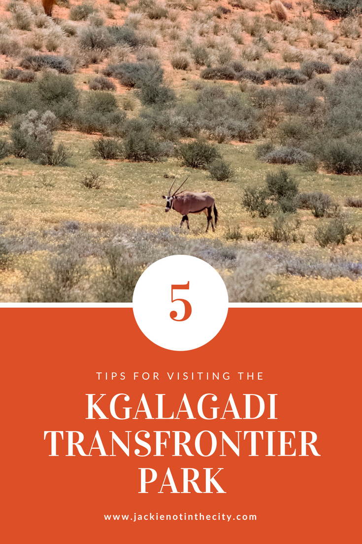 Tips for visiting the Kgalagadi Transfrontier Park