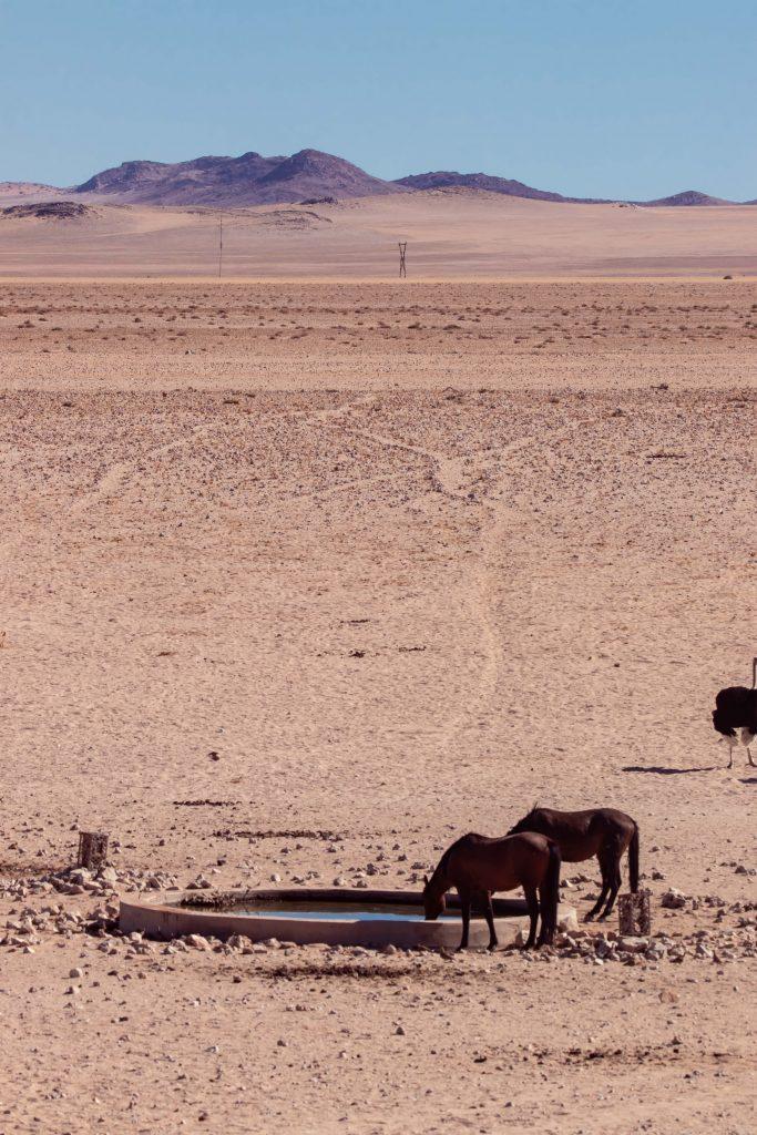 Namibia Desert Horses