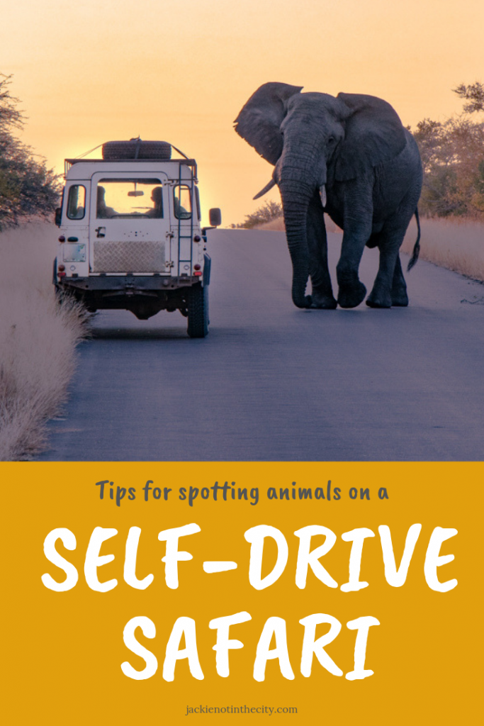 Tips for spotting animals on a self-drive safari